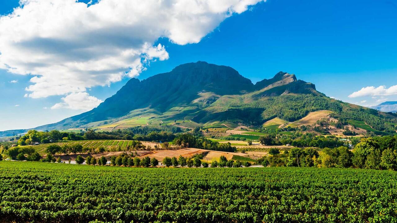 Vineyards, Delaire Graff Estate, Helshoogte Pass, Cape Winelands near Stellenbosch, South Africa.