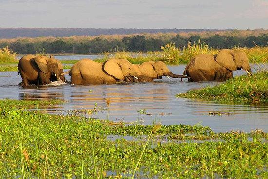 the-elephant-crossing